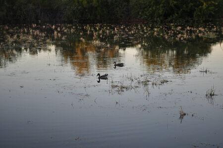 gilbert: Riparian Preserve at Water Ranch