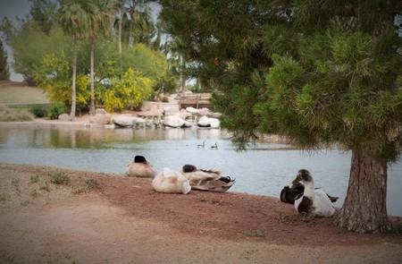 par�?s: Freestone Park - Patos - la protecci�n de los dem�s mientras duermen abril