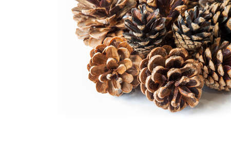 Pine cones isolated on white background. Stock Photo
