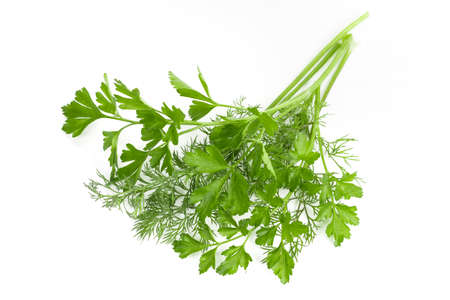 dill parsley to spices bunch isolated on white background. Foto de archivo