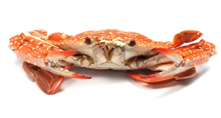 Steamed blue crab Stock Photo - 13110758