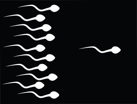 sexo femenino: la captura de esperma  Vectores