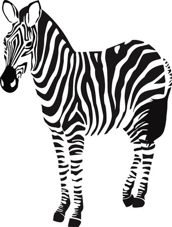 africa outline: the vector zebra