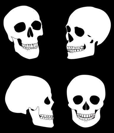 skull Stock Vector - 3461865