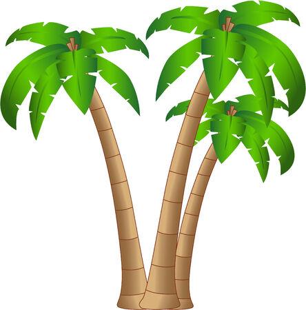 der Vektor tropischen Baum isolated on white Background 8