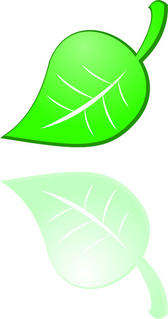the vector green leaf on white Vector