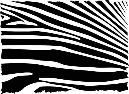 vecror zebra abstract background   photo