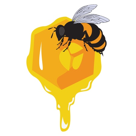 mead: the bees and honeycomb with honey