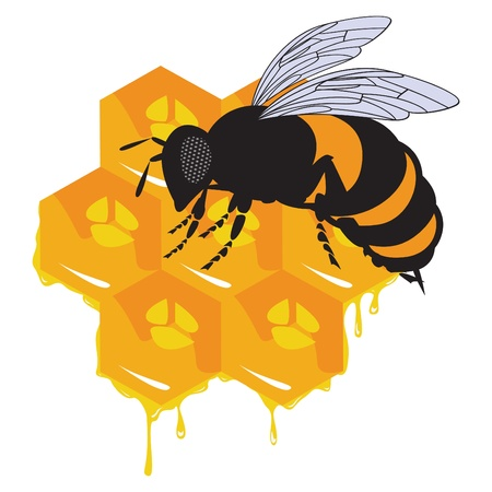 the bees and honeycomb with honey Stock Vector - 10538743