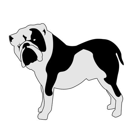 Bulldog abstract silhouette illustration Illustration