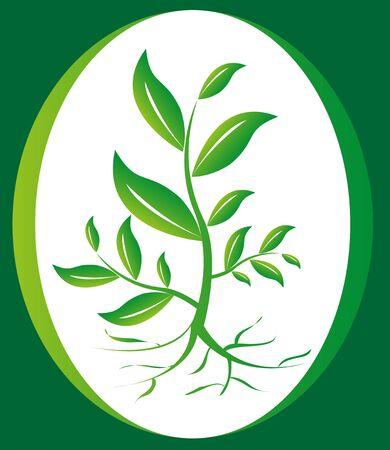 녹색 식물 배경
