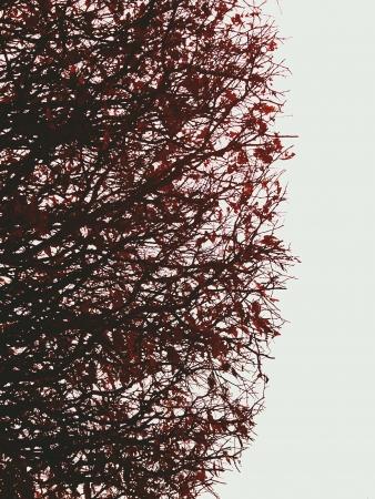 赤いシェード付きツリー