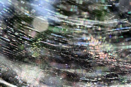 macrophoto: spider and cobweb,Gran Canaria,Spain