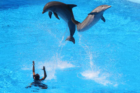 dolphin,Gran Canaria,Spain Stock Photo