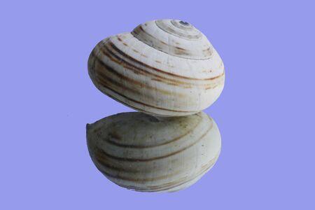 macroshot: snails,Gran Canaria,Spain