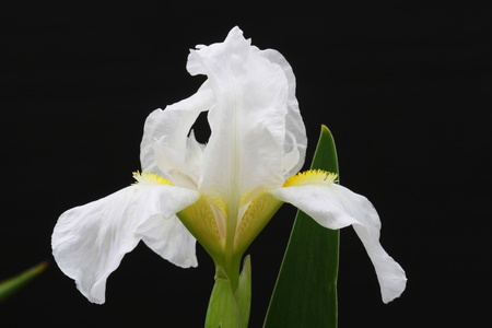 macroshot: iris,Gran Canaria,Spain Stock Photo