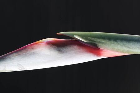 macroshot: strelitzia,Gran Canaria,Spain