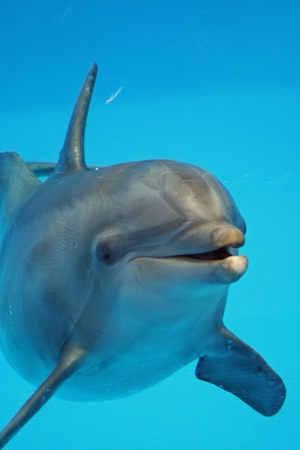 dolphin,Gran Canaria,Spain Stock Photo