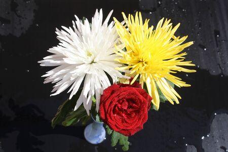 chrysanthemum anastasia,Gran Canaria,Spain Stock Photo - 16015538