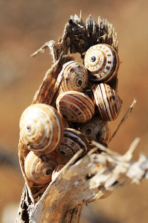 gastropoda: snail,Gran Canaria,Spain Stock Photo