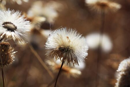 tracheophyta: grass,Gran Canaria,Spain Stock Photo