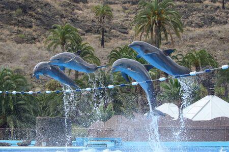 cetacea: dolphin Stock Photo