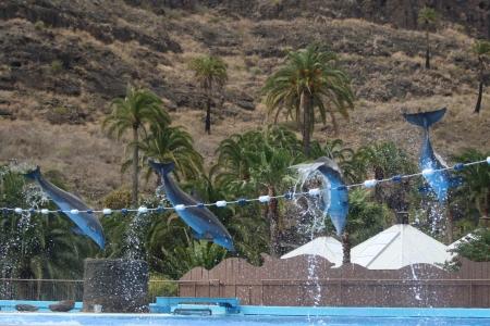 cetacea: dolphin,Gran Canaria,Spain Stock Photo