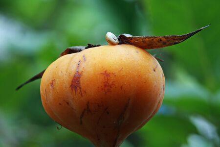 spermatophytina: rose and rose bud,Gran Canaria,Spain Stock Photo