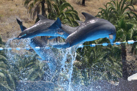 cetacean: dolphin,Gran Canaria,Spain Stock Photo