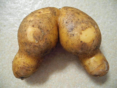 eudicots: Potato, Gran Canaria, Spain