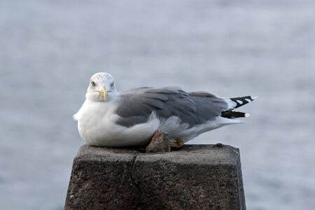 gull sits on the stock Stock Photo