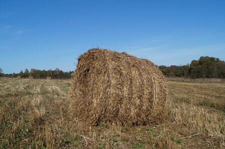 Rick straw round shape on the field after the grain harvest Stock fotó
