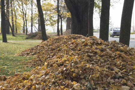 heaps: Heaps of fallen leaves in a city park in autumn
