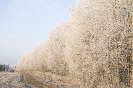 clear day in winter time: Winter road along the forest