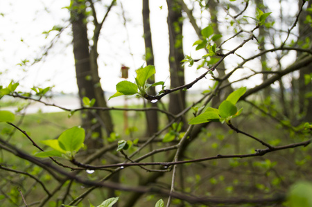 young green leaves on a tree in a forest in spring Фото со стока
