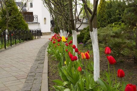 walkway: flowerbed of beautiful red tulips along a walkway