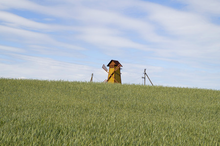 maturity: Wooden windmill standing in a wheat field