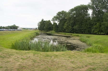 neat: Small neat pond with reeds