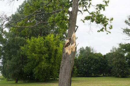 clean off: Tree damaged squally wind Stock Photo