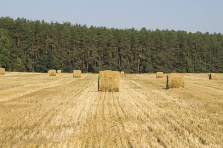 stern: Bales round shape straw on the field after the wheat harvest Stock Photo