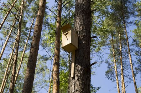 weighs: Small house for birds on a tree in the forest