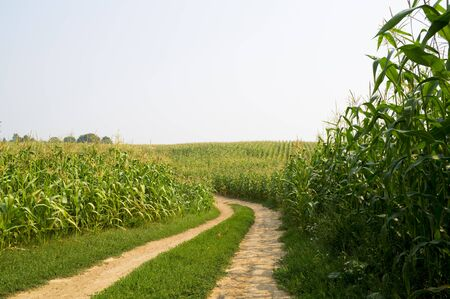corn field: The scenic road that runs along the corn field Stock Photo