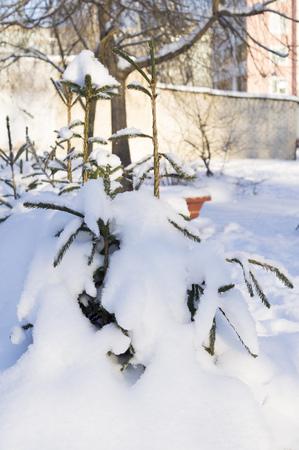 little boy digs snow shovel