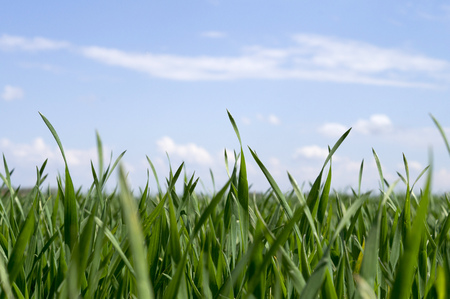 Sprouts of green grass on a background of blue sky