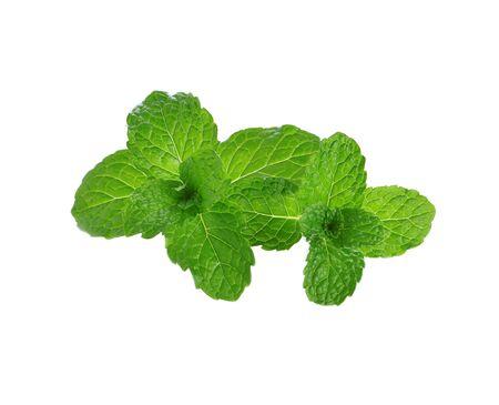 Fresh raw mint leaves on white background