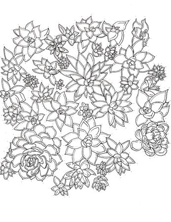 black and white succulents line work