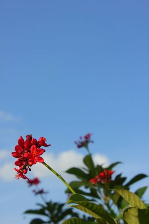 Flowers against the sky  photo