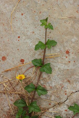 Tree with yellow flowers on the ground  photo