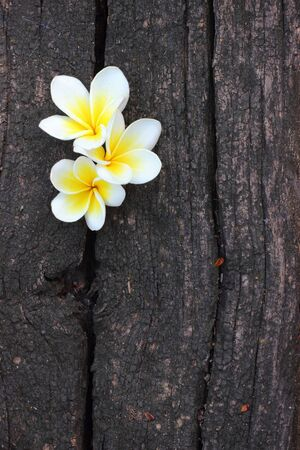 White flowers on a wooden floor