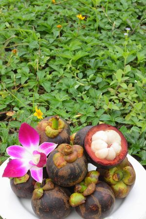 Mangosteen placed on green leaves  photo